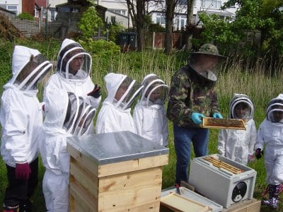 Layton Bee Project