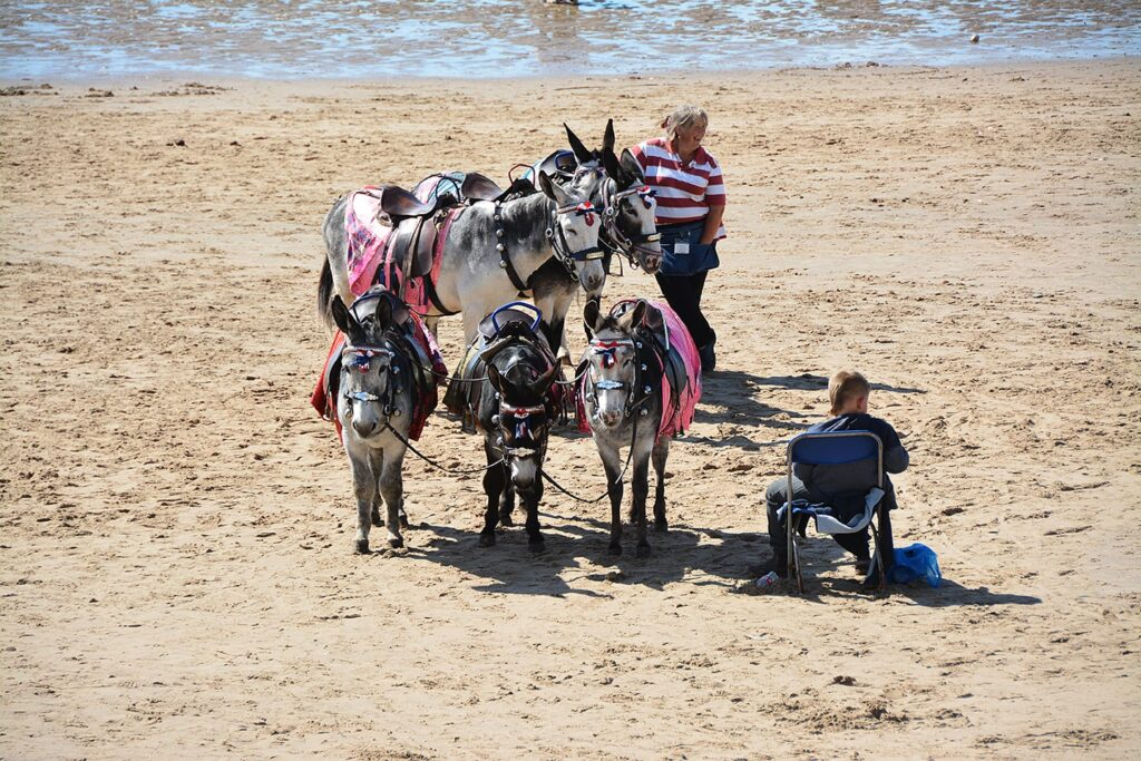 Enjoy donkey rides on Blackpool Beaches