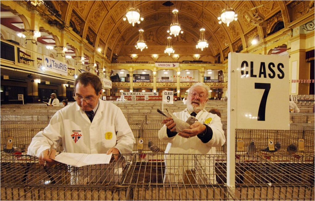Blackpool Pigeon Show, held at the Winter Gardens each January