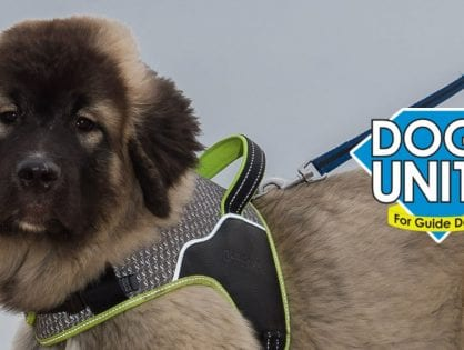 Dogs Unite Sponsored Dog Walk - POSTPONED