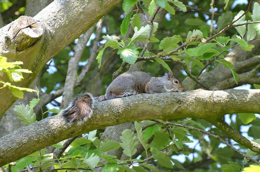 See squirrels on the Stanley Park Nature Trail