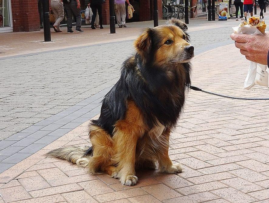 Dog Control Orders lead to a Dog Friendly Destination