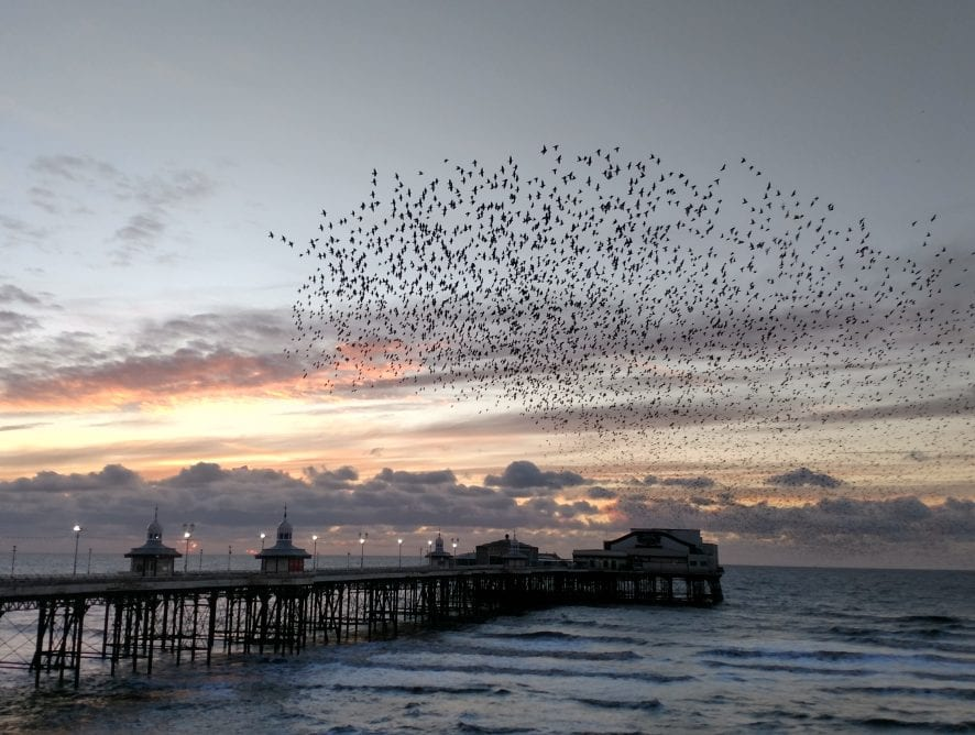 Starlings and North Pier at sunset by Neil Curtis from Wolverhampton