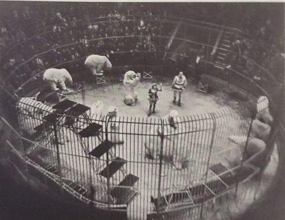 Polar bears at Blackpool Tower Circus