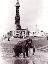 Walking elephants from Blackpool Tower Circus on the beach